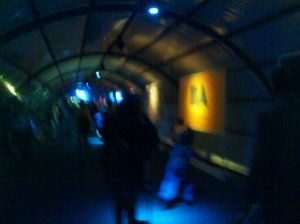 A pretty unfocused photo of BA's Government's tunnel. Sorry, I was walking.